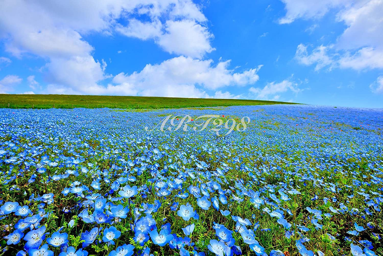 Amazon 風景写真ポスター ひたち海浜公園 ネモフィラ50 国営ひたち