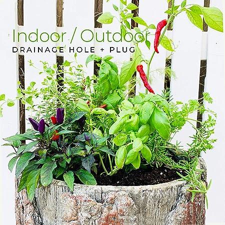 Bushy Box - Macetero de jardín de Hierbas Frescas para Cocina y balcón, para Interiores y Exteriores, Estilo Vintage, para Plantas: Amazon.es: Hogar