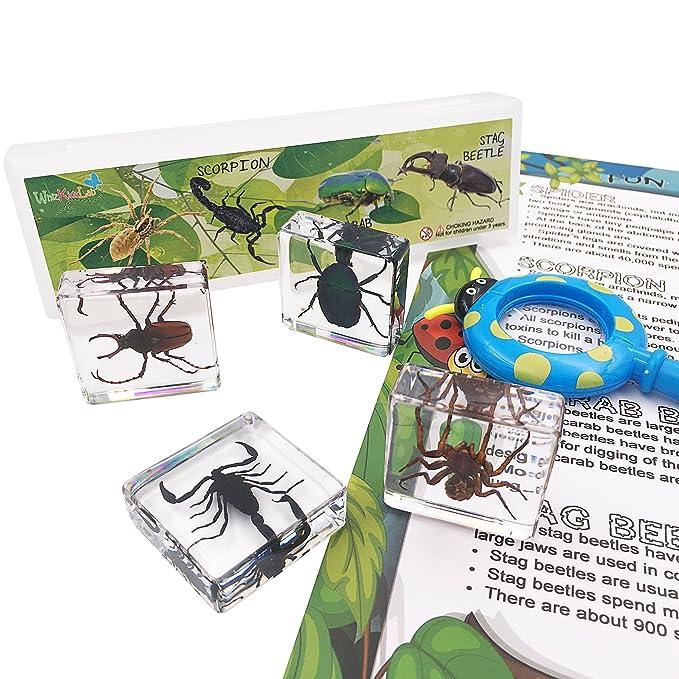 Amazon.com: 4pcs Real Bugs Arachnid Resina de insectos ...