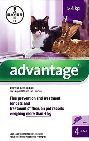 Ventaja 80 mg solución Spot-on para gatos y mascotas conejos grandes (más de