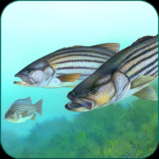 Fishing Fanatic - Fishing App with Solunar - Lure Chart
