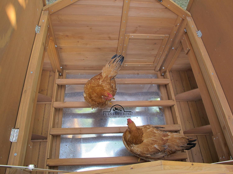 Innenansicht Hühnerhaus Pets Imperial Savoy