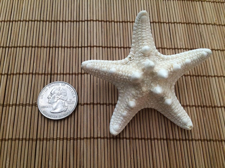 Men's Knobby Starfish Beach Wedding Boutonnieres, 2