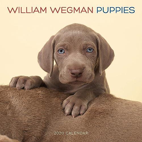 William Wegman Mans Best Friend 2020 Wall Calendar