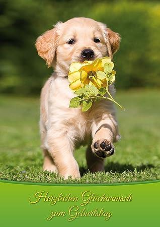 Carte Anniversaire Animaux.Xxl Carte D Anniversaire Chien Avec Fleur Felicitations