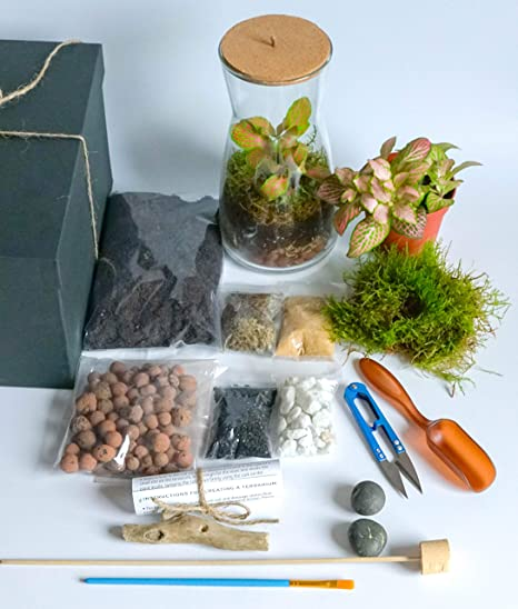 Handmade Clear Glass Terrarium Kit With Round Cork Top Open Or