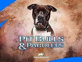 Watch Pit Bulls And Parolees Season 16 Prime Video