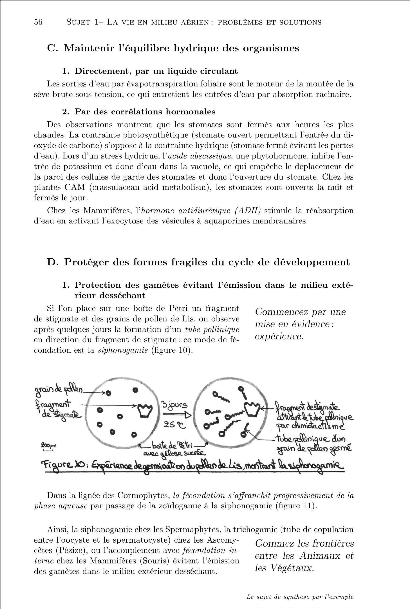 Le sujet de synthèse par lexemple: Alexandra Goudard: 9782914010597: Amazon.com: Books