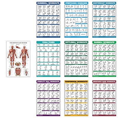 """Dumbbell 18/"""" x 27/"""" LAMINATED 10 Pack Exercise Workout Poster Set"""