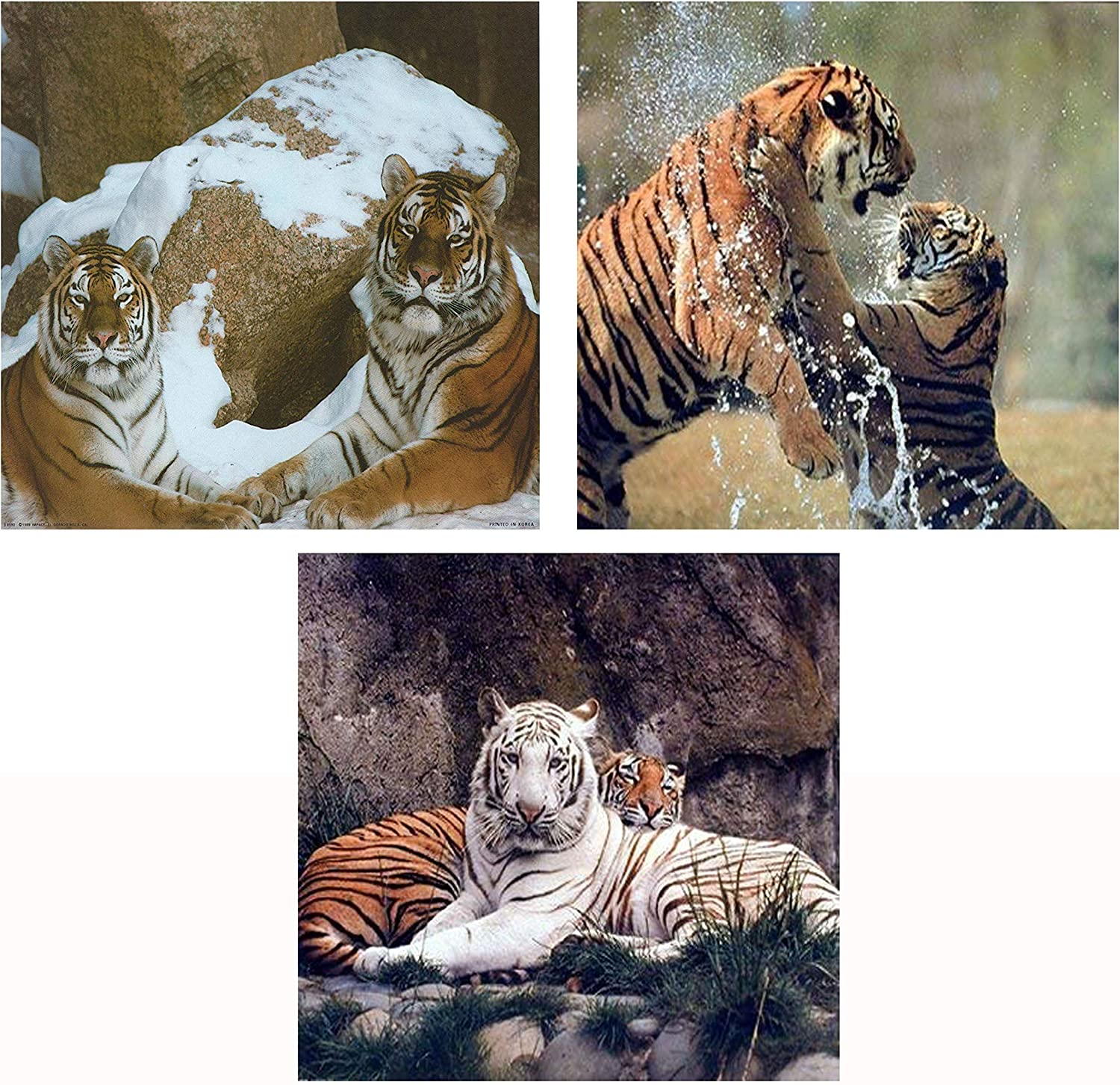 White and Yellow Tigers Wildlife Animal Three Set Picture 8x10 Wall Decor Art Print Posters