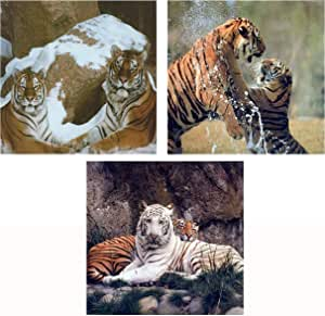 Tiger Pair White and Orange Tigers Up Close Photo Wall Picture 8x10 Art Print