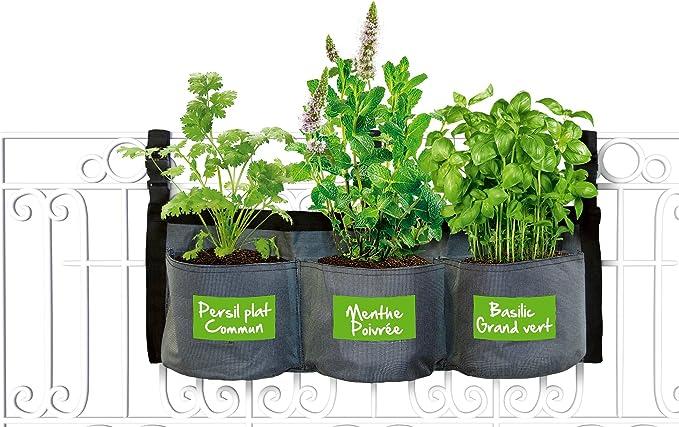 GRAINES DE BASILIC GRAND VERT sachet de 3 grammes adapté à un jardin familial