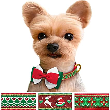 Great Valentine Bow Adorable Dog - 91VF22LICTL  Photograph_476471  .jpg