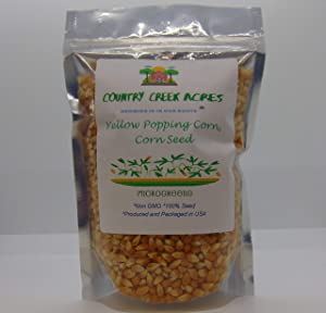 5 oz Yellow Popping Corn, Corn Seed for Growing, Heirloom, Open Pollinated Non-GMO Garden Seeds by Country Creek Acres, Grown in USA, Microgreen Seed