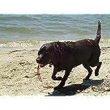 FLOATING SLINGSHOT HIGH BOUNCE BALL DOG TOY - PRO BALL GO-FRR - USA - ALL SIZES