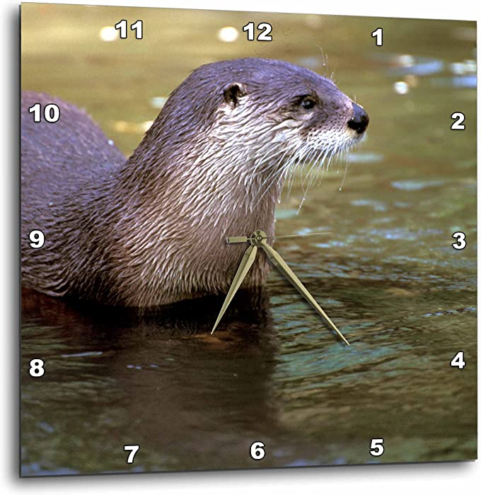 3dRose DPP_86996_3 Peru, Manu River Region. Giant River Otter Wildlife - SA17 GJE0121 - Gavriel Jecan - Wall Clock, 15 by 15-Inch