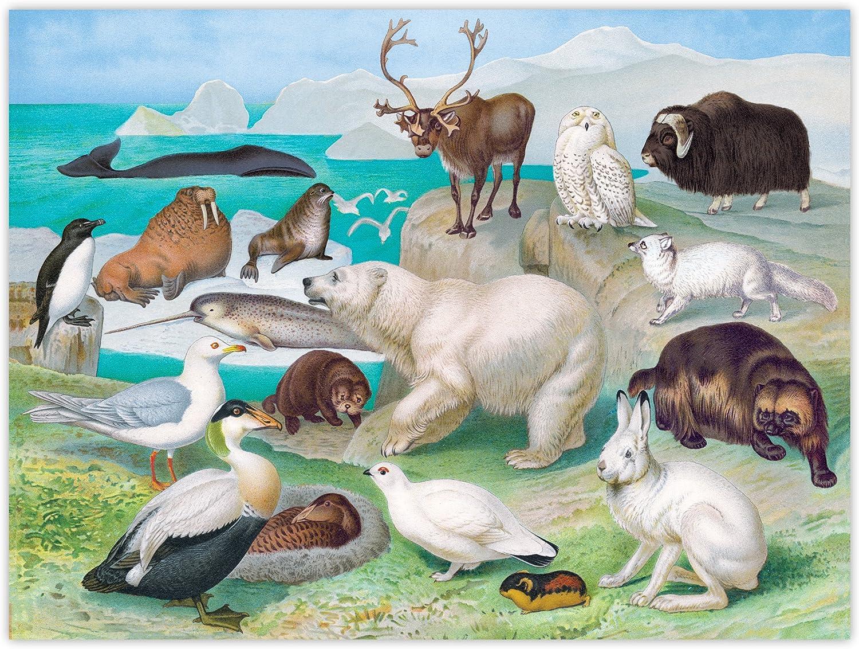 1000 Pieces eeBoo Beautiful World Arctic Animals