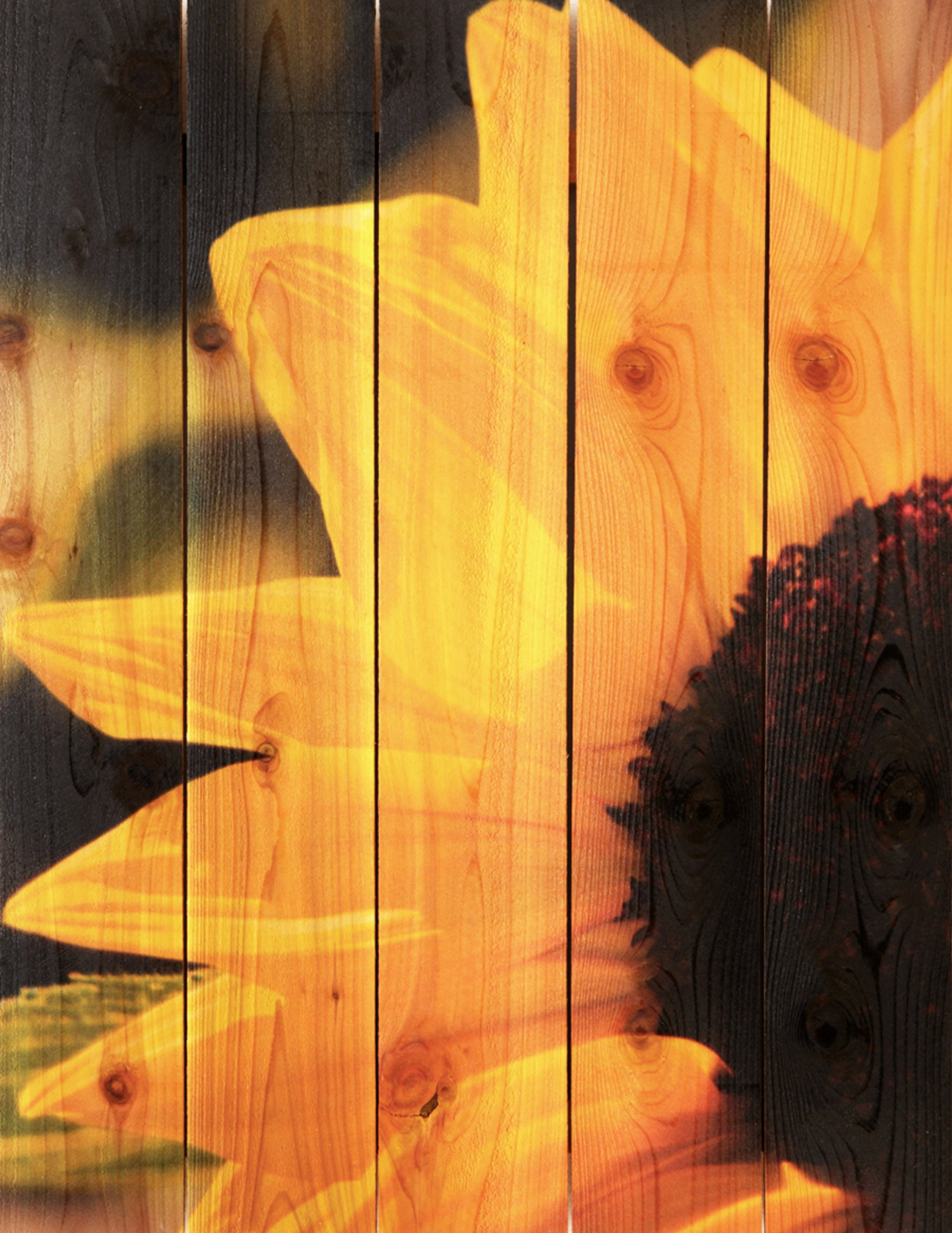 Gizaun Art Yellow Sunflower 28-Inch by 36-Inch Inside/Outside Wall ...