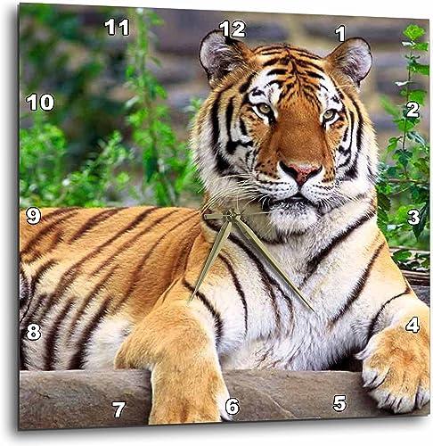 3dRose Siberian Tiger – Wall Clock, 15 by 15-Inch DPP_3132_3