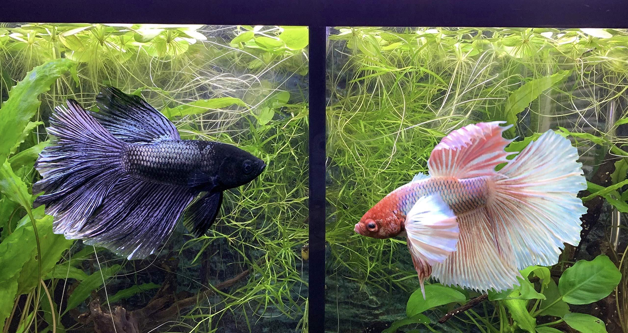 Please Check Compatible Tank Below. Lifewithpets 29 Gallon Fish Tank Divider
