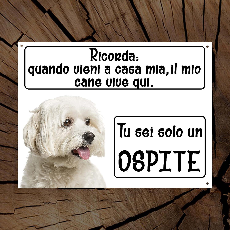 Maltese Ricorda Il Mio Cane Vive Qui Tu Sei Solo Un Ospite Targa