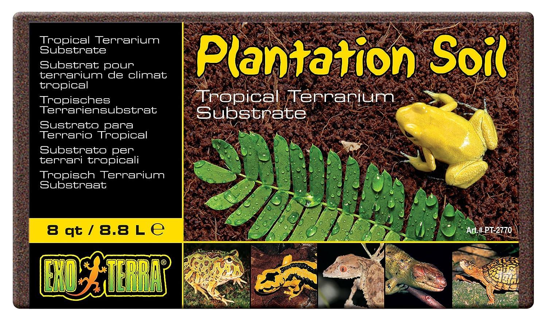 Exo Terra Sustrato Plantation Trail Coco - 650 gr: Amazon.es: Productos para mascotas