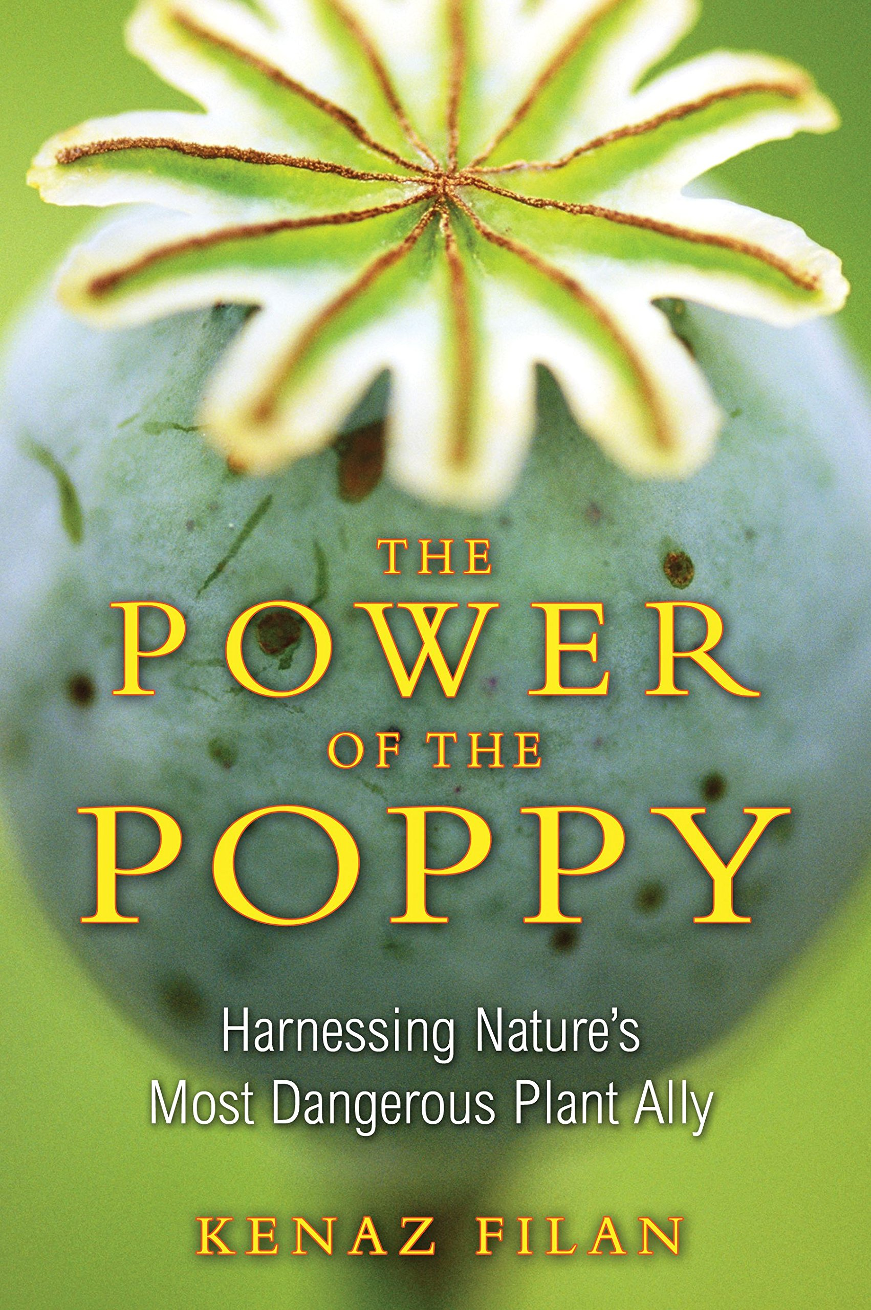 The Power Of The Poppy Harnessing Natures Most Dangerous Plant