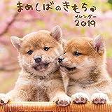 まめしばのきもちカレンダー2019 ([カレンダー])