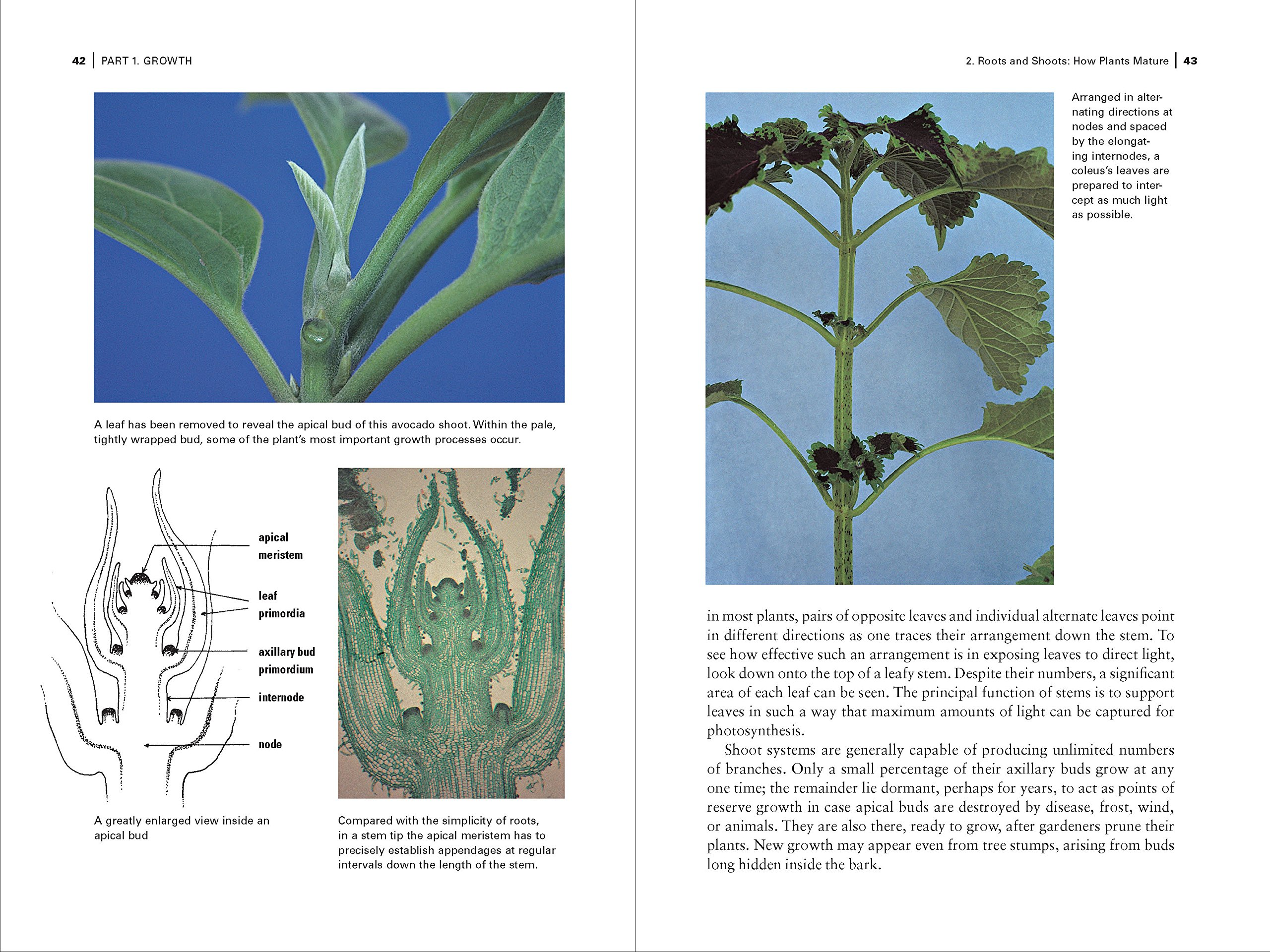 The botany coloring book by paul young - Botany For Gardeners Third Edition Brian Capon 9781604690958 Books Amazon Ca