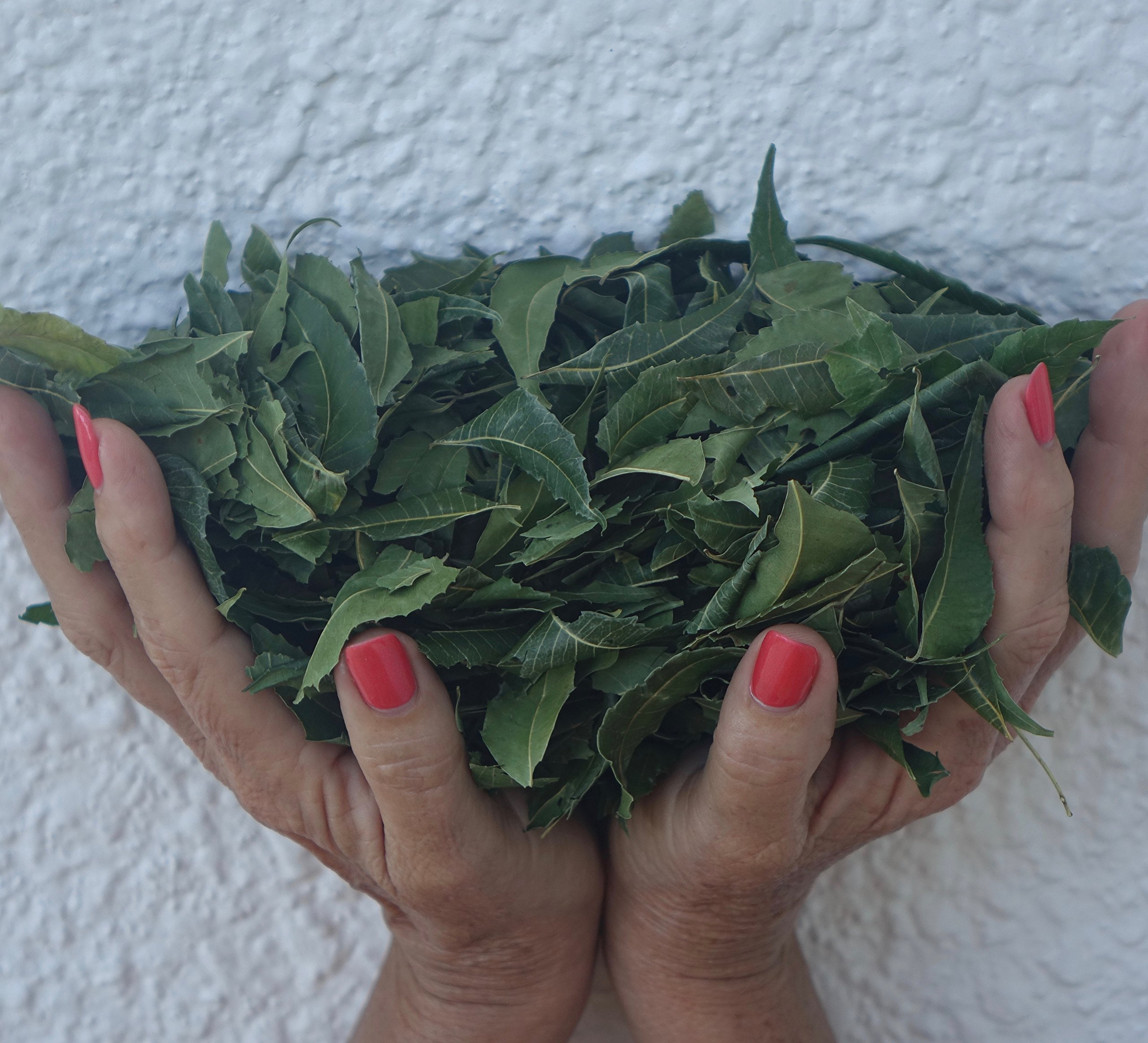 Neem Leaves Whole, Wild Harvested Shade Dried. Premium, Organic, Green (5 Oz) for Tea, Boost Immune System, Bathing, Skin Irritations! All About Neem USA!