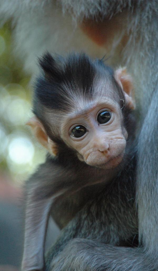 Amazon Com Baby Monkey Wallpaper Hd Wallpapers Of Baby