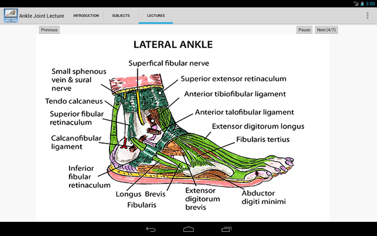 Amazon.com: Anatomy of the Ankle Joint: Appstore for Android