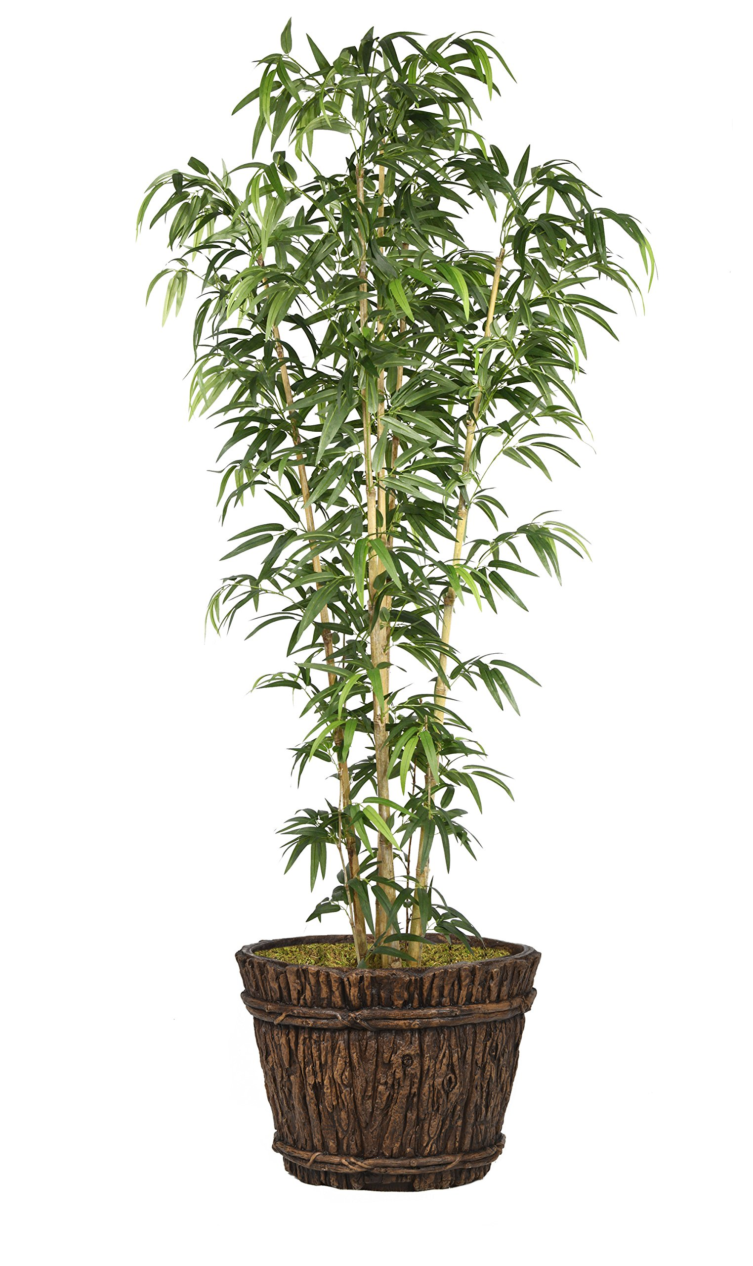 Laura Ashley VHX116217 Bamboo Tree in Natural Poles Planter, 80''