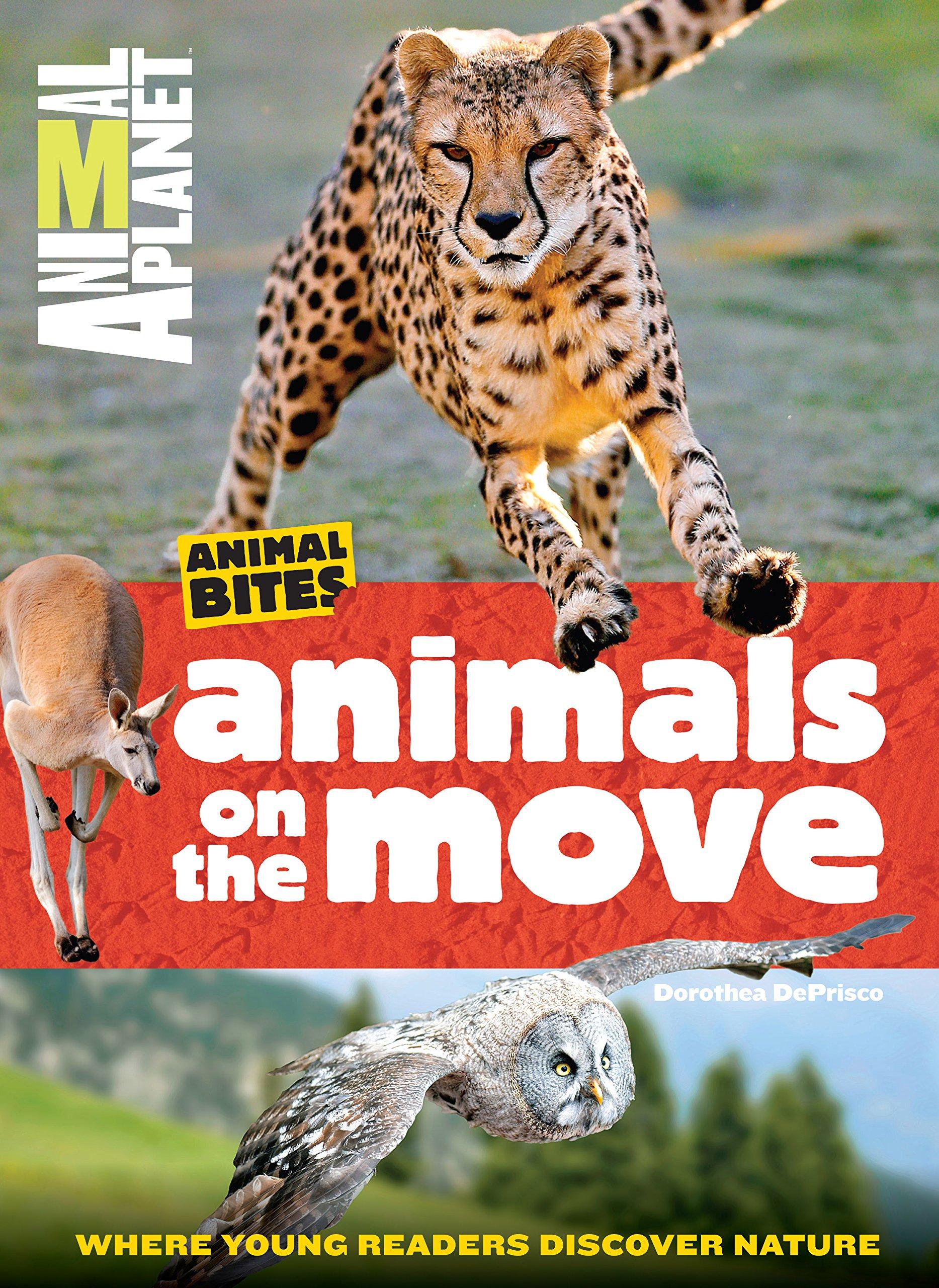 animals-on-the-move-animal-planet-animal-bites