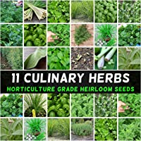 Herb Seeds Mint Parsley Chives Dill Basil Coriander Sage Thyme Tarragon Oregano 11 Packs Culinary Herbal Garden