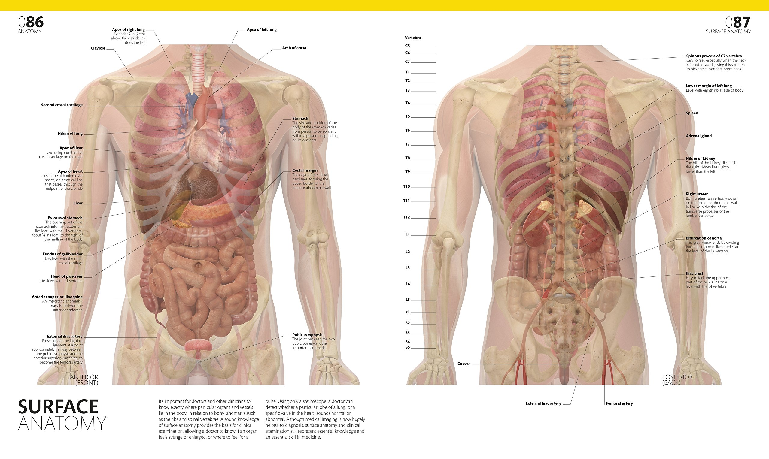The Complete Human Body: The Definitive Visual Guide: Amazon.co.uk ...