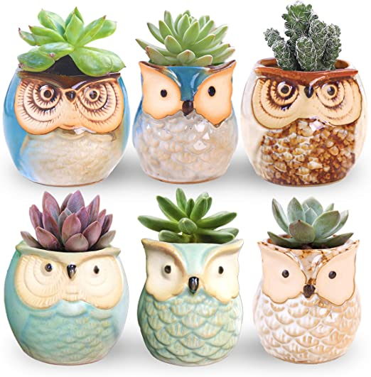 """Claywa Ceramic Owl Succulent Pots Cute Animal Plant Planters 2.75/"""" to 3.35/"""" with"""
