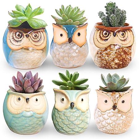 Ceramic Succulent Bonsai Pots
