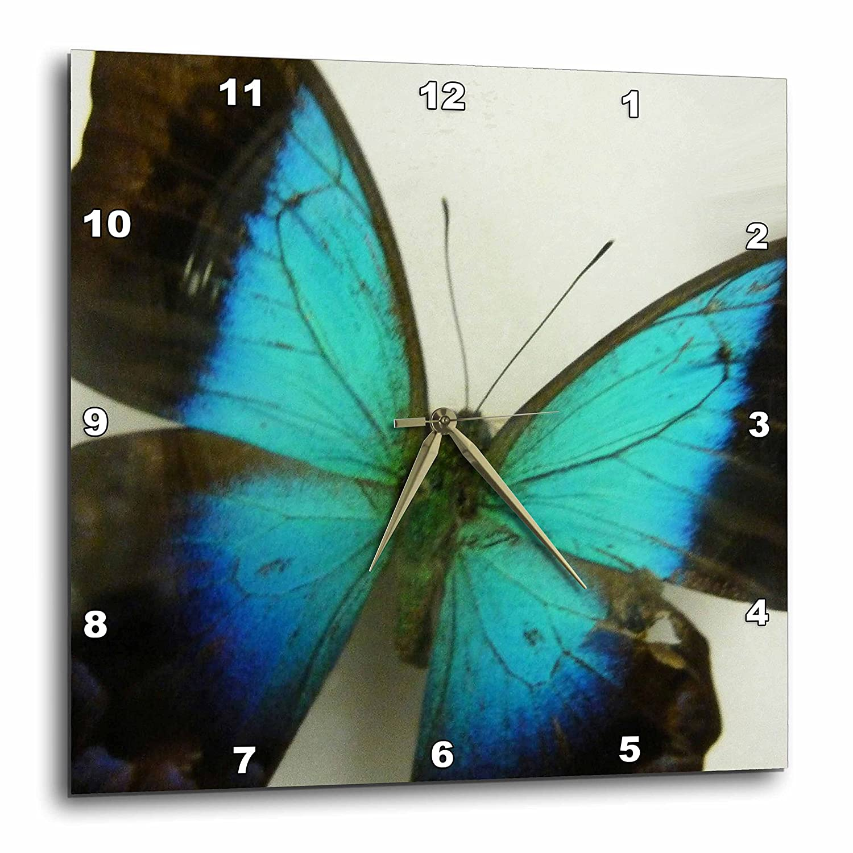 13-inch DPP/_13935/_2 3dRose Florida Butterfly-Wall Clock