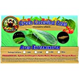 Green Lacewing 1,000 Eggs - Organic Natural Aphid Control
