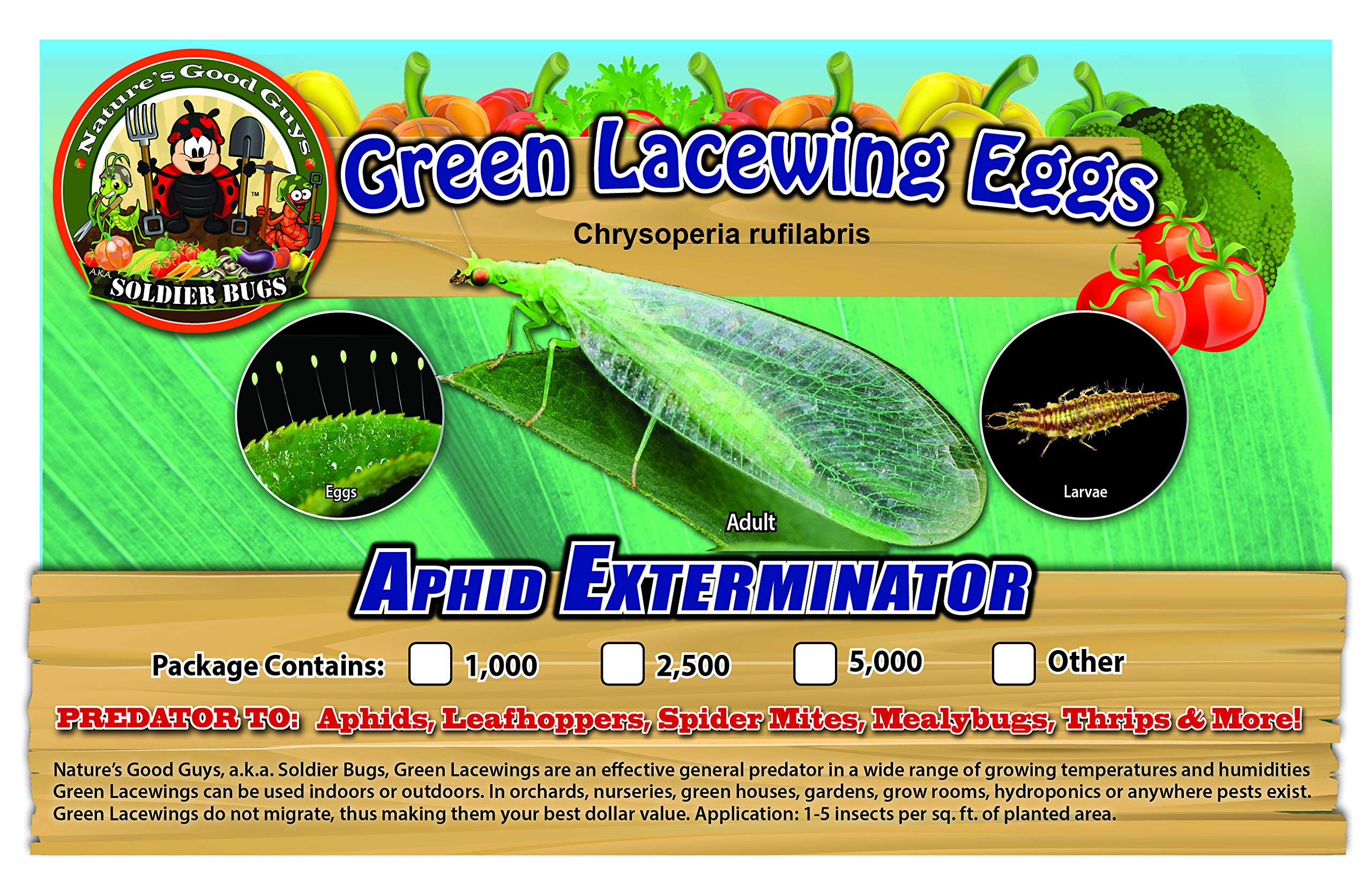 Green Lacewing 2,500 Eggs - Organic Natural Aphid Control by Nature's Good Guys