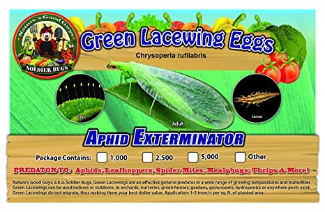 Amazon com : Green Lacewing 5, 000 Eggs - Organic Natural Aphid