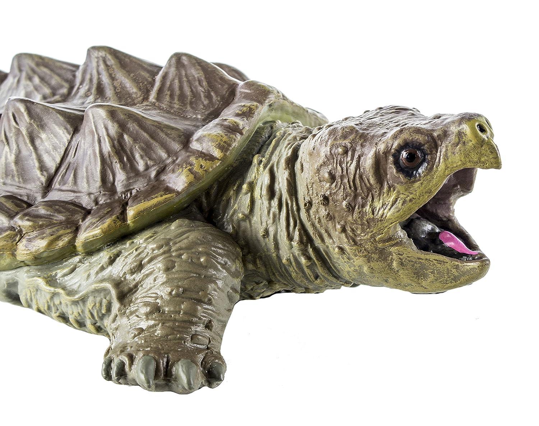 Warning turtles amp tortoises inc - Warning Turtles Amp Tortoises Inc 11