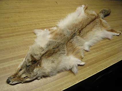 Tanned Coyote Hide #2 Quality Split Open Fur