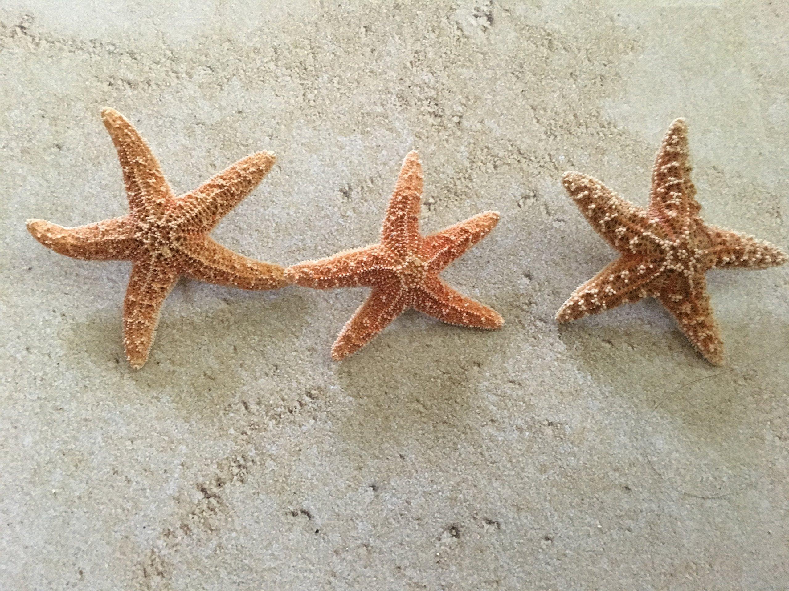 Men's Sugar Starfish Beach Wedding Boutonnieres, 3