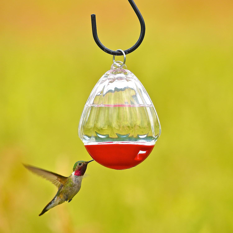Amazon.com : Perky-Pet 447-12 Round 10-Ounce Glass Hummingbird ...