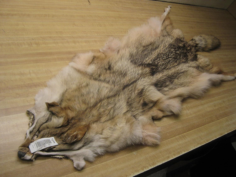 Tanned Coyote Hide #2 Quality Split Open Fur