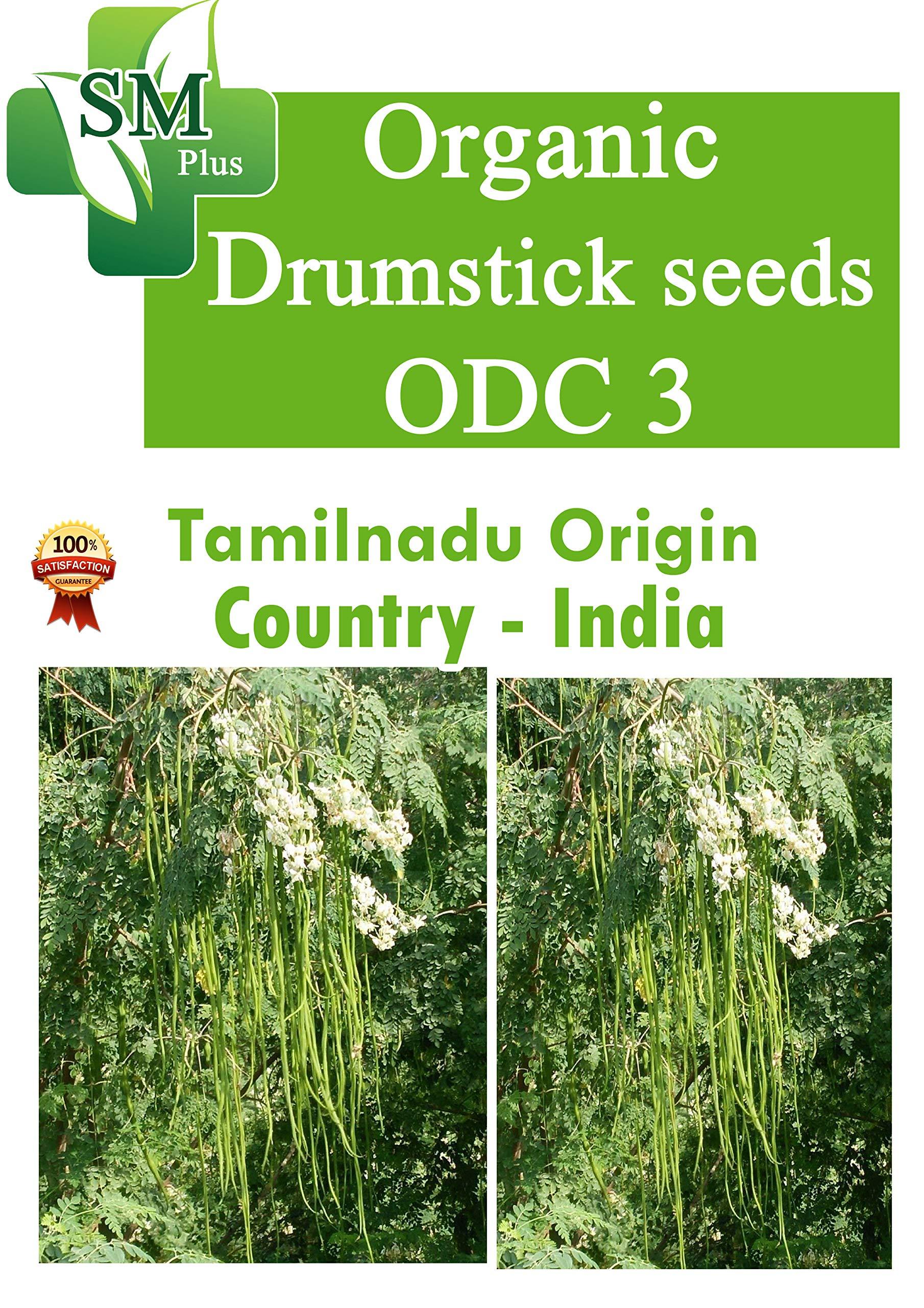 riyo Fedrick Moringa ODC 3 Drumstick Seeds (250 g, 1000 Seeds) (B07P942PKZ) Amazon Price History, Amazon Price Tracker