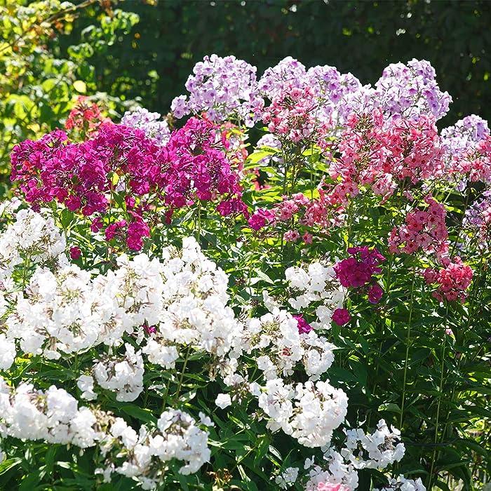 Top 10 Garden Women Outdoor Decoration