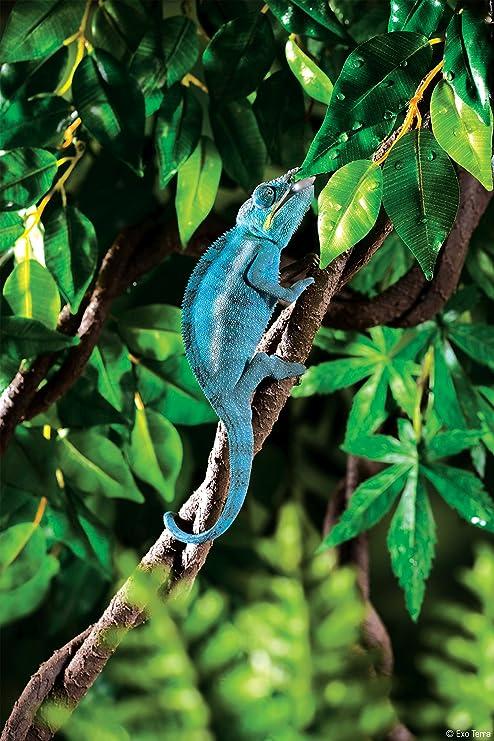Exoterra Décoration Liane Flexible Petit Modèle pour Reptiles et  Amphibiens  Exo Terra  Amazon.fr  Animalerie 255bb7dd70a